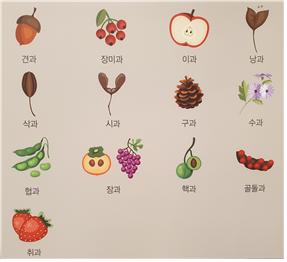 5-1. 열매의_종류에_따른_종자_분류법_01.png