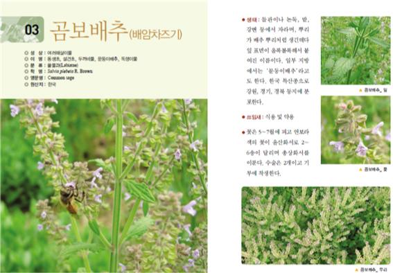[꿀벌레터] 6월~7월 토종 꿀벌이 꼭 필요한 여름 꽃과 약초-2.jpg